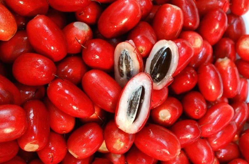 Fruta do Milagre e seus benefícios para a saúde