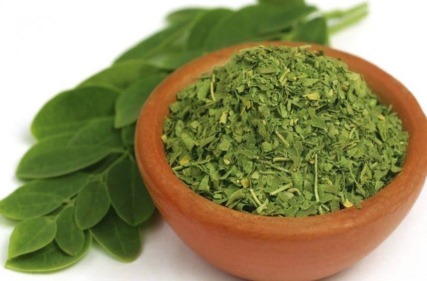 Moringa Oleífera e seus principais benefícios para a saúde!