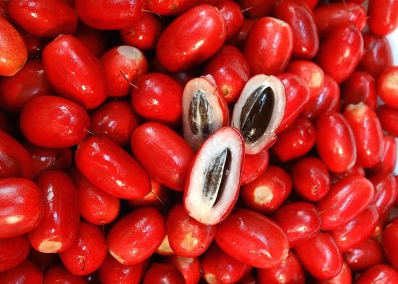 Cultivar-a-fruta-do-milagre-em-casa-A-Origem