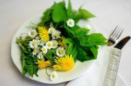 Plantas PANCs – Plantas Alimentícias Não Convencionais